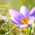 6.Familien-Frühlingsfest 30.3.19